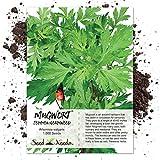 Seed Needs, Mugwort Herb (Artemisia vulgaris) 1,000 Seeds