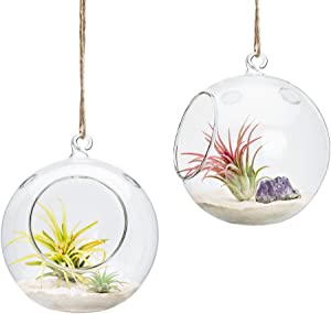 Mkono 6-Inch Hanging Glass Planter Round Air Plant Terrarium Decorations for Succulent, Tillandsia, Candle Holder, 2 Packs
