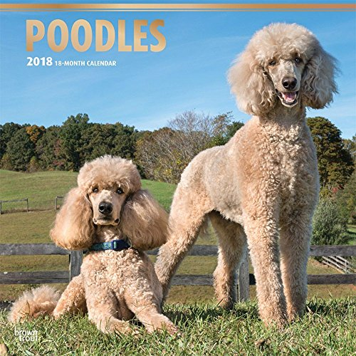 Poodles 2018 12 x 12 Inch Monthly Square Wall Calendar with Foil Stamped Cover, Animals Dog Breeds (English, French and Spanish Edition) (Poodle Cover)