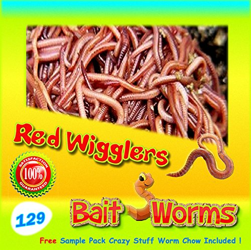 Live Bait Worms - 1