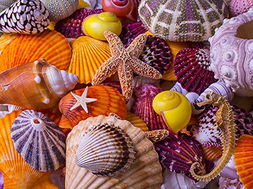 Sea Shell Treasures Jigsaw Puzzle 550 Piece