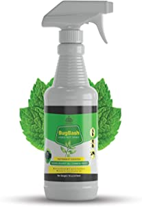 INFESTICS Organic Home Pest Control Spray - Kills & Repels, Ants, Roaches, Spiders, and Other Pests Guaranteed - All Natural - Pet Safe - (Indoor/Outdoor Spray - 16oz