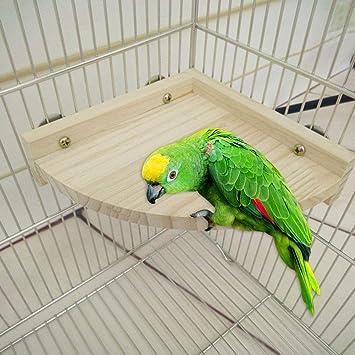 El pájaro mascota se posa en la plataforma y se encuentra en el ...