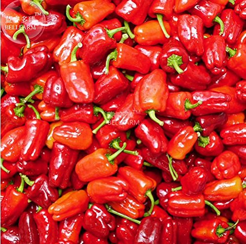 New Bell Pepper 'Cajun Belle' Vegetable 20+ Seeds