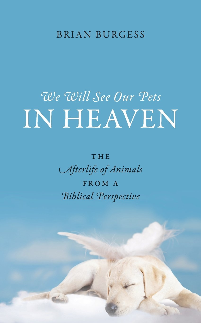 We Will See Our Pets In Heaven The Afterlife Of Animals From A
