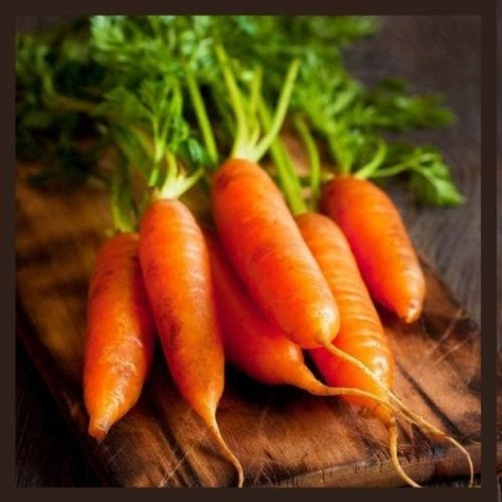 Little Finger Carrot Seeds | Heirloom & Non-GMO Carrot Seeds | Vegetable Seeds for Planting Outdoor Home Gardens | Planting Instructions Included