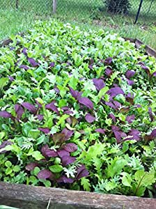 Braising Greens Mesclun Mix 1000+ Seeds for Current Year * Baby Micro Greens