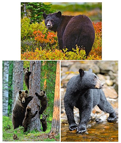 3 different BEARS - Animals - 3D Lenticular Postcard Greeting Cards ()