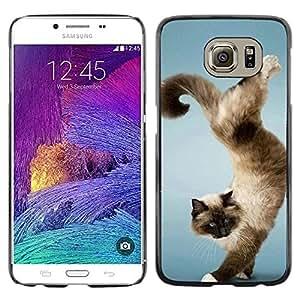 Paccase / SLIM PC / Aliminium Casa Carcasa Funda Case Cover - Funny Beautiful Cat Trick - Samsung Galaxy S6 SM-G920