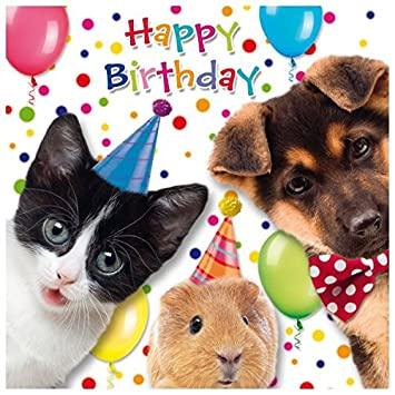 Susy Card 40010618 Guinea Pig Birthday Greeting Dog Cat Dimensions