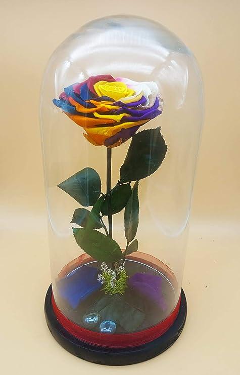 Rosa preservada eterna arcoíris Multicolor. Cúpula de Cristal 30 cm Rosas preservada arcoíris XXL de 10 cm diámetro. Fabricado en España.: Amazon.es: Hogar