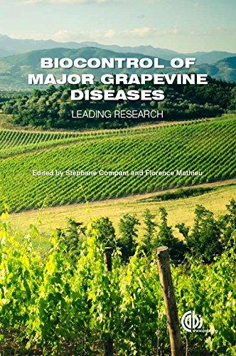 grape pest management - 9