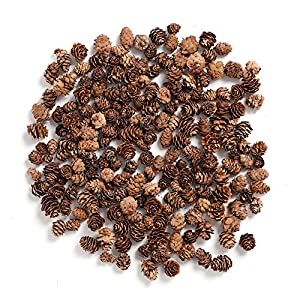 Byher Pine Cones, Mini Pinecones in Bulk for Crafts, 8OZ, Pack of 110 77