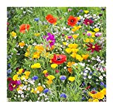Search : Western Wildflower Seed Mix - Annuals and Perennials, Sun and Partial Shade