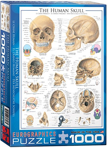 Human Skull 1000-Piece Puzzle