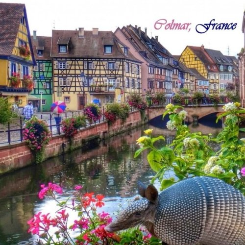 Wine White Alsace (Colmar, France)
