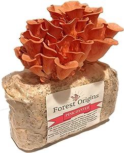 Pink Oyster Mushroom Farm - Beautiful Mushroom Growing Kit - All in One Indoor Growing Kit - Exotic Mushroom