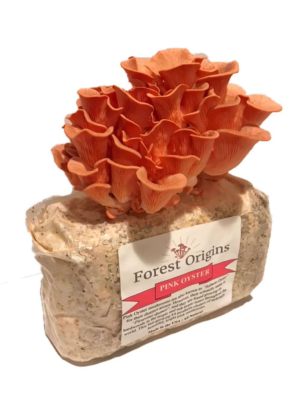 Pink Oyster Mushroom Farm - Beautiful Mushroom Growing Kit - All in One Indoor Growing Kit - Exotic Mushroom by Forest Origins