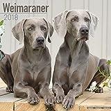 Weimaraner Calendar 2018 - Dog Breed Calendar - Premium Wall Calendar 2017-2018
