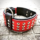 Bestia Genuine Leather Dog Collar with Studs and Soft Leather Cushion. Wide. Durable. Longlasting. Padded. Pitbull. Bulldog. Bully. APBT. Rottweiler. Cane Corso. Handmade in Europe!