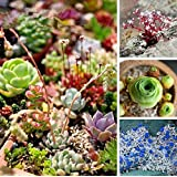 Mix Succulent plants Lithops seeds Fairy flower Fleshy seeds Bonsai plants Seeds for home & garden 200 Seeds/bag