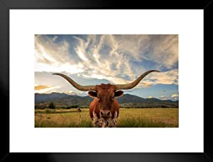Texas Longhorn Bull Standing in Pasture Close Up Photo Art Print Matted Framed Wall Art 26x20 inch
