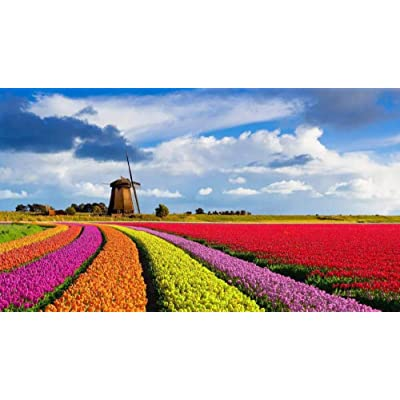 SJYYR Dutch Tulip Flower Sea Windmill 500 Pieces Photo Jigsaw Puzzle DIY Toys for Adults Decoration Collectiable: Home & Kitchen