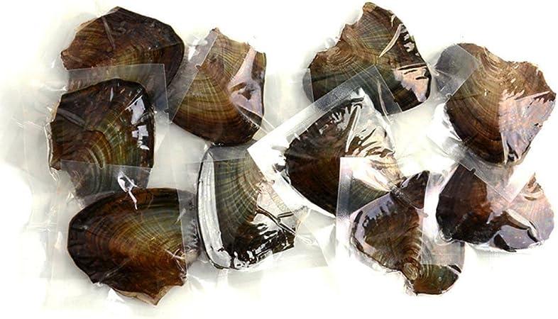 Boten 10pcs agricultura Pearl Oyster Pearl mejillones perlas de ...