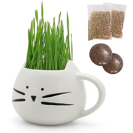 teagas orgánico de hierba de gato con gato hierba maceta, orgánico del suelo y mascota