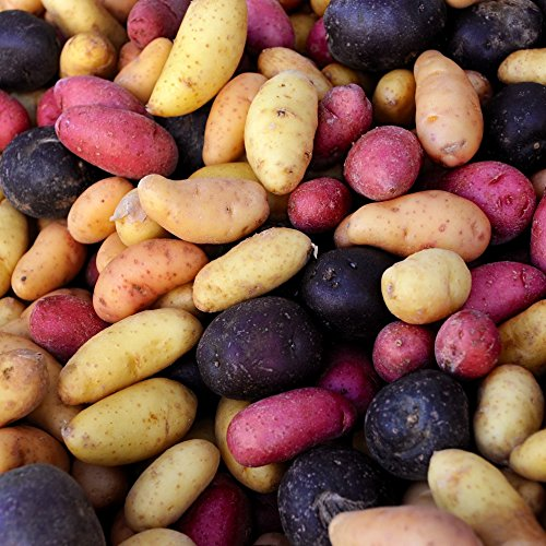 Fingerling Potatoes (US Grown Organic Fingerling Potatoes Mixed Colors - Organic Fingerling Seed Potatoes from Easy to Grow TM)