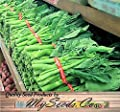 200 x Chinese Broccoli, Kailan Gai Lan Seeds - Most Popular vegetable in Cantonese Cuisine - Approx. 60 - 65 Days - By MySeeds.Co