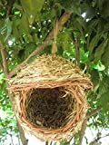 CTY Pet Bird Nest with 3-Inch Opening
