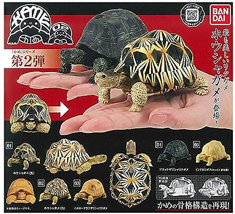 Set of 5 BANDAI Turtle Gashapon 02 Vol.2 Mini Figure