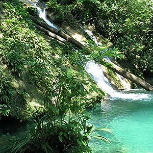 Caribbean Rainforest with FUNDAECO Radio/TV Program