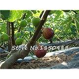 100 Sweet Honey FIG seeds - Fragrant - King Figs Courtyard Sementes De Flores Fig Tree bonsai plant rare fruit seeds