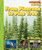 From Pinecone to Pine Tree, Ellen Weiss, 0531185370