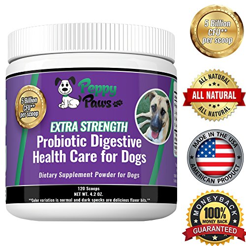 Cheapest Best Probiotics for Dogs with Acidophilus Improves Dog Constipation, Gas, Dog Diarrhea, Bad Breath, Allergies, All Natural Dog Probiotic Powder, 5 Billion CFUs, Probiotics for Puppies to Seniors Check this out.