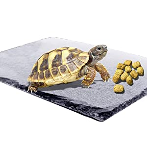 Reptile Basking Platform Tortoise Rock Plate Turtle Bathing Area Feeding Food Dish Resting Terrace
