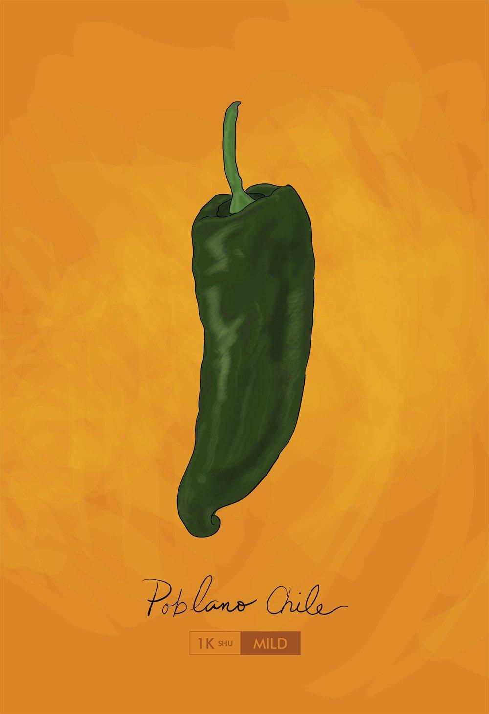 Amazon.com: Poblano Chili Pepper Kitchen Print Giclee Original Art ...
