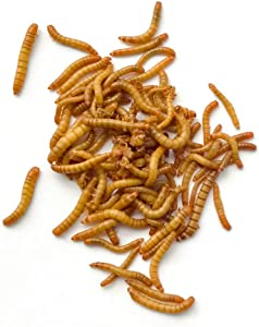 DBDPet Premium Live Mealworms - 250 Count - Guaranteed Live Arrival - Food for Geckos, Birds, Small Animals, Lizards, Chickens, Fish and More!