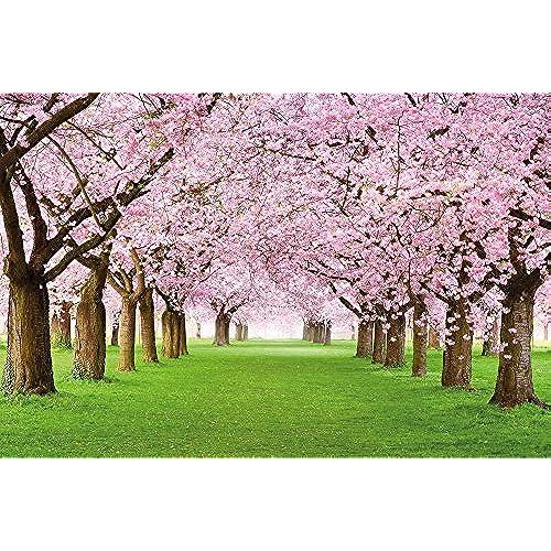 Cherry Blossoms Wallpaper Amazon