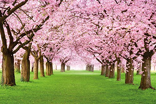 Cherry Tree Photo Wallpaper – Forest with Cherry Trees – Spring Pink Wallpaper Mural – Trees Forest Wall Decoration By Great Art 55 x 39.4 Inch (Wallpaper Cherry)