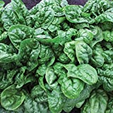 Gaea's Blessing Seeds - Avon Spinach 250+ Seeds Non-GMO Open Pollinated High Germination Rate