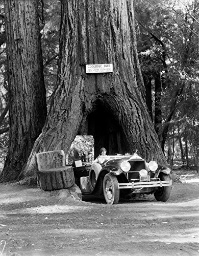1930s Woman Driving Convertible Car Through Opening In Giant Sequoia Tree Trunk Coolidge Tree Mendocino California Print