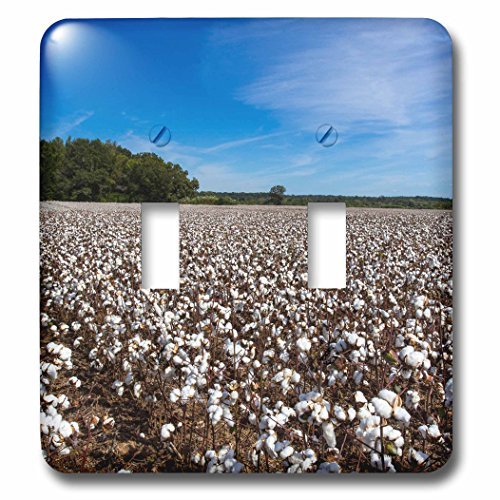 Danita Delimont - Agriculture - Mature field of cotton near Tishomingo, Mississippi, USA - Light Switch Covers - double toggle switch - Mature Pics Usa