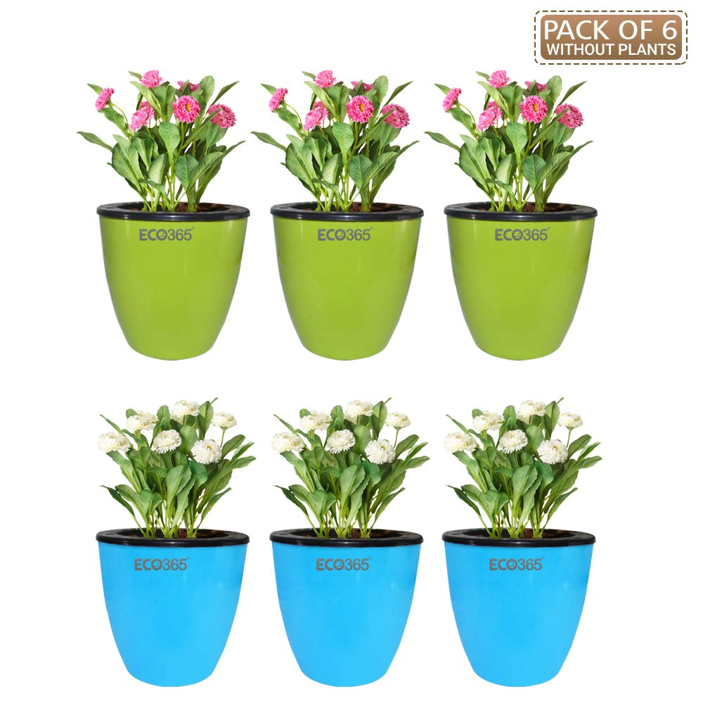 Amazon price history for 6 Self Watering Decorative Pots by Eco365 (6 pots) for Gardening(Green and Sky Blue Color)
