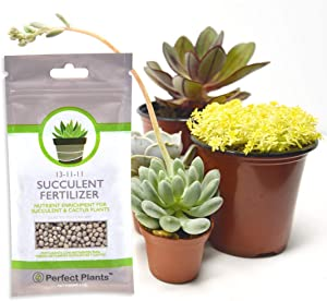 Succulent Fertilizer by Perfect Plants - Light Rate, Slow Release Formula for All Succulent and Cactus Types