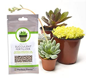 Succulent Fertilizer by Perfect Plants