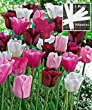 Olympic Mixture Tulip 225 SEEDS UPC 646263362839 + 3 Plant Markers