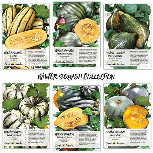Seed Needs Winter Squash Seed Collection, Set of 6 Non-GMO Seed Packets (Sweet Meat, Sweet Dumpling, Delicata, Hubbard, Table King & Queen) Seeds by Seed Needs